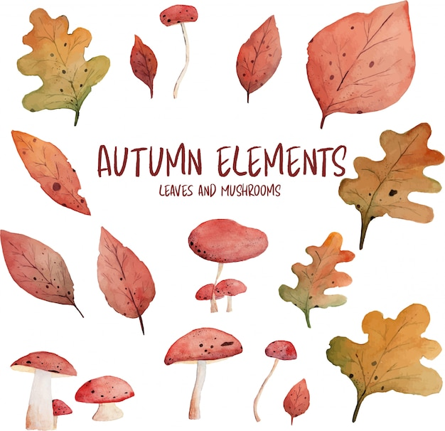 Autumn leaves and mushrooms watercolor elements