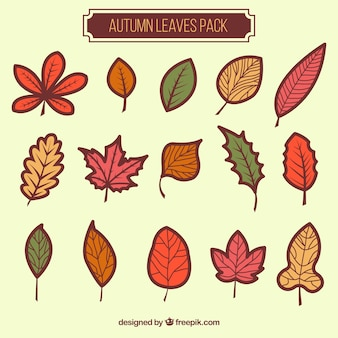 Autumn leaves pacchetto