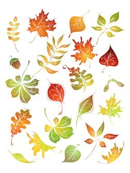 Осенние листья установлены. береза, вяз, дуб, рябина, клен, каштан, желудь и осина, изолированные на белом фоне.