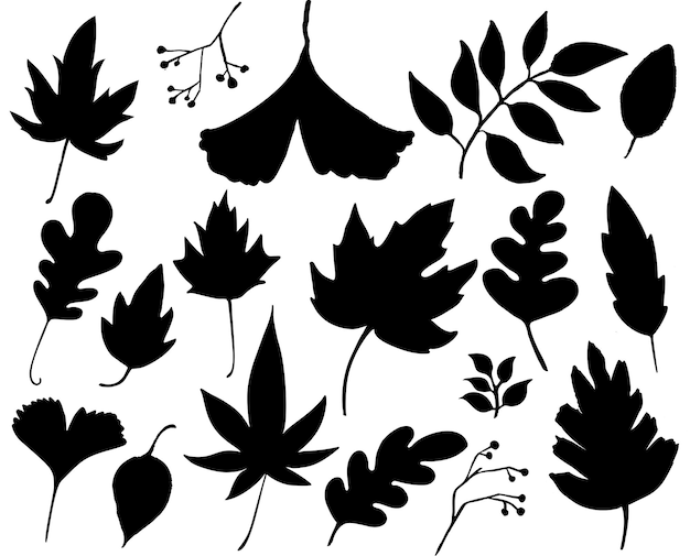 Autumn leaves set black leaf silhouettes isolated on white graphic elements for autumn designs
