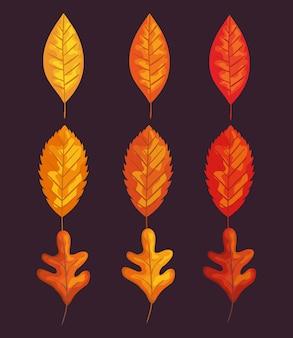 紅葉セットデザイン、季節の自然飾り庭の装飾と植物学のテーマイラスト