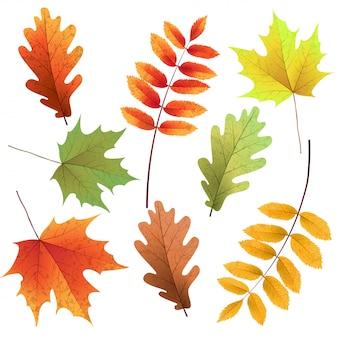 Набор осенних листьев, изолированные на белом фоне. рябина, дуб, кленовый лист. букет из осенних листьев.