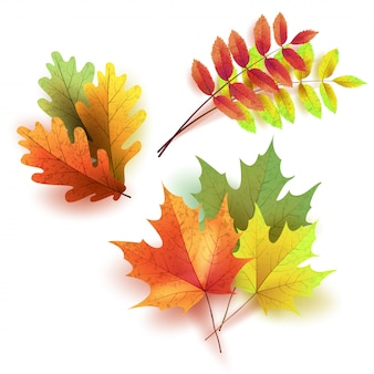 Autumn leaves set, isolated on white background. rowan tree, oak, maple leaf. bouquet from autumn leaves.