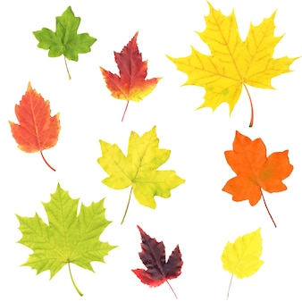 Осенние листья набор изолированные