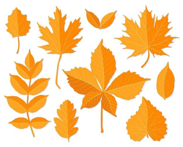 Осенние листья задать вектор