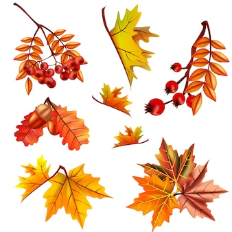 Autumn leaves set with berry and oak