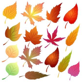 Autumn leaves vector set seasonal theme