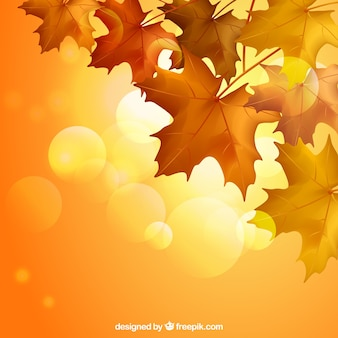 Autumn leaves with warm colors
