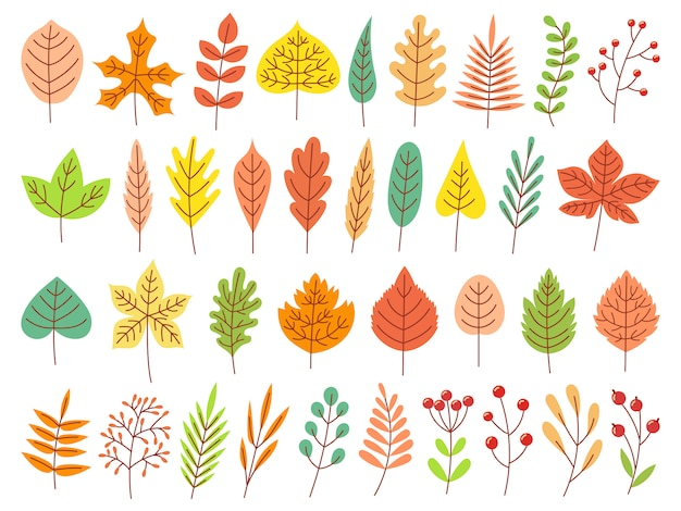 Autumn leaves. yellow autumnal garden leaf, red fall leaf and fallen dry leaves   set