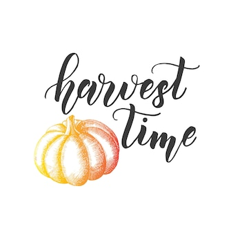 Autumn lettering calligraphy phrase - harvest time. invitation card with pumkin and hand made quote isolated on white. sketch, vector design