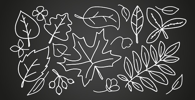 Autumn linear leaves set isolated on black background trees foliage elements
