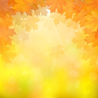 Autumn maple leaves on blurry background with sun rays.