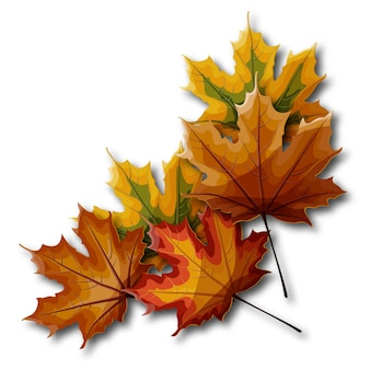 Autumn maple leaves in different shades of yellow, green, red, orange and brown.