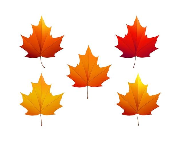다양한 색상의 가을 단풍. 벡터 일러스트 레이 션.