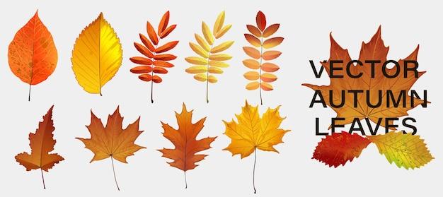 Осенний декор природы. осенние листья падают графический дизайн. осенний сезон конкретных векторный фон.