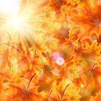 Осенние оранжевые и красные опавшие листья ... векторные иллюстрации. eps10