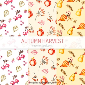 Autumn patterns with leaves and fruits