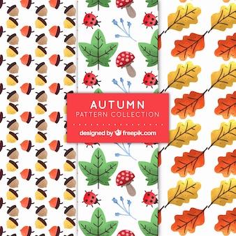 自然の要素を持つ秋のパターン