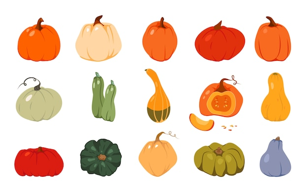 Autumn pumpkin flat set. colored cartoon different shape orange gourd. gather farm harvest, season crop capacity. thanksgiving and halloween element. ripe vegetable squash