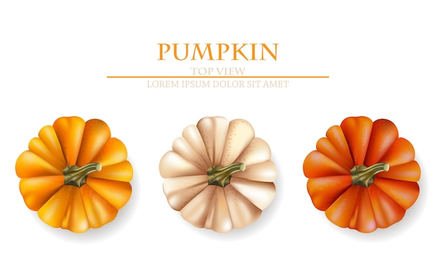 Autumn pumpkins collection