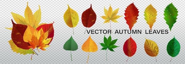 Осенние реалистичные листья на белом. векторная иллюстрация, набор ярких осенних листьев.