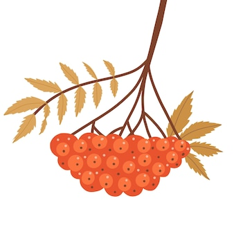 Autumn rowan branch with leaves and red berries twig with fall yellow leaf and rowanberries autumnal...
