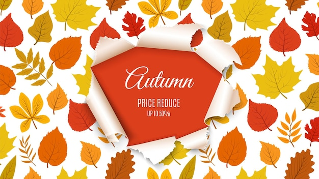 Autumn sale banner. forest fall leaves with paper hole background. seasonal discount, special price poster or flyer template. november nature design vector illustration. fall autumn season banner