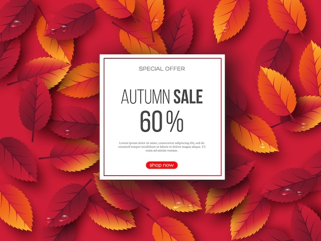 Autumn sale banner with 3d leaves and water drops. pink background - template for seasonal discounts, vector illustration.
