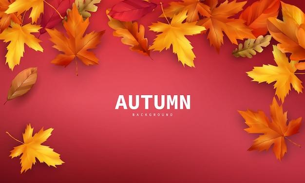 가을 판매 떨어지는 나뭇잎 배경 자연