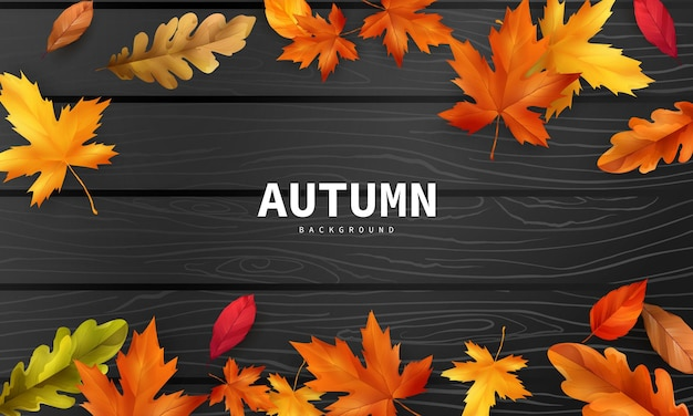 Autumn sale falling leaves background nature