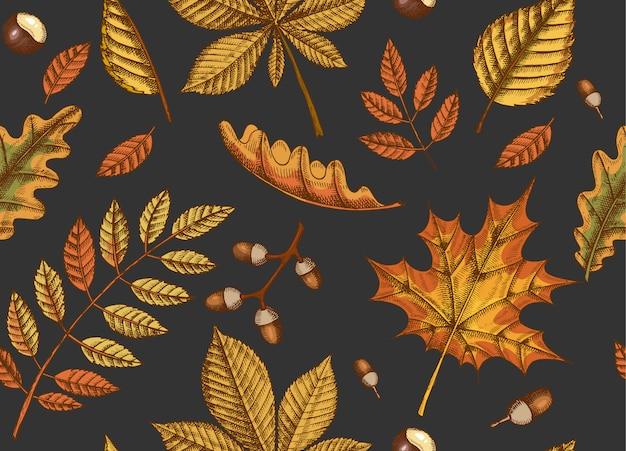 Осенний бесшовный узор с рисованной листья клена, березы, каштана, желудя, ясеня, дуба на черном. эскиз. для обоев