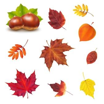 Осенний набор с градиентной сеткой