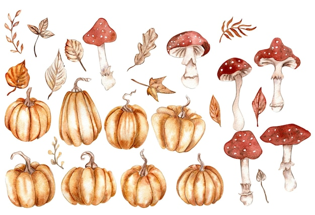 Autumn set with pumpkins and mushrooms