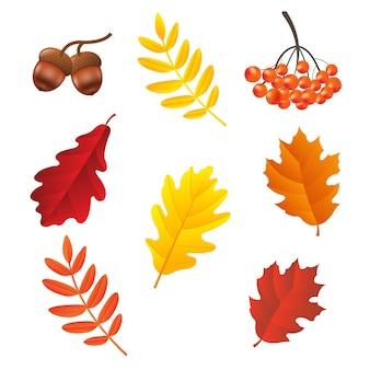 가을 세트