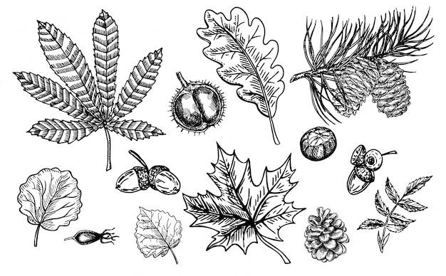 가 스케치 잎, 열매, 전나무 콘, 견과류, 버섯 및 도토리로 설정합니다. 자세한 숲 식물 요소. 빈티지 가을 계절 장식. 오크, 단풍 나무, 밤나무 잎 그리기. 삽화.