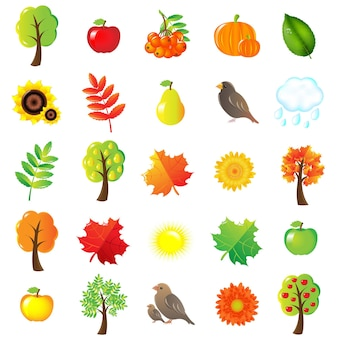 Autumn symbols and elements isolated