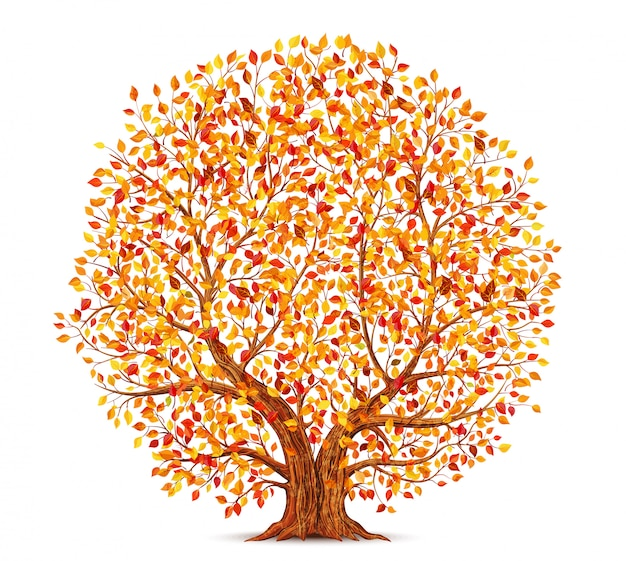 Autumn tree with yellow, orange and red leaves isolated on white background illustration
