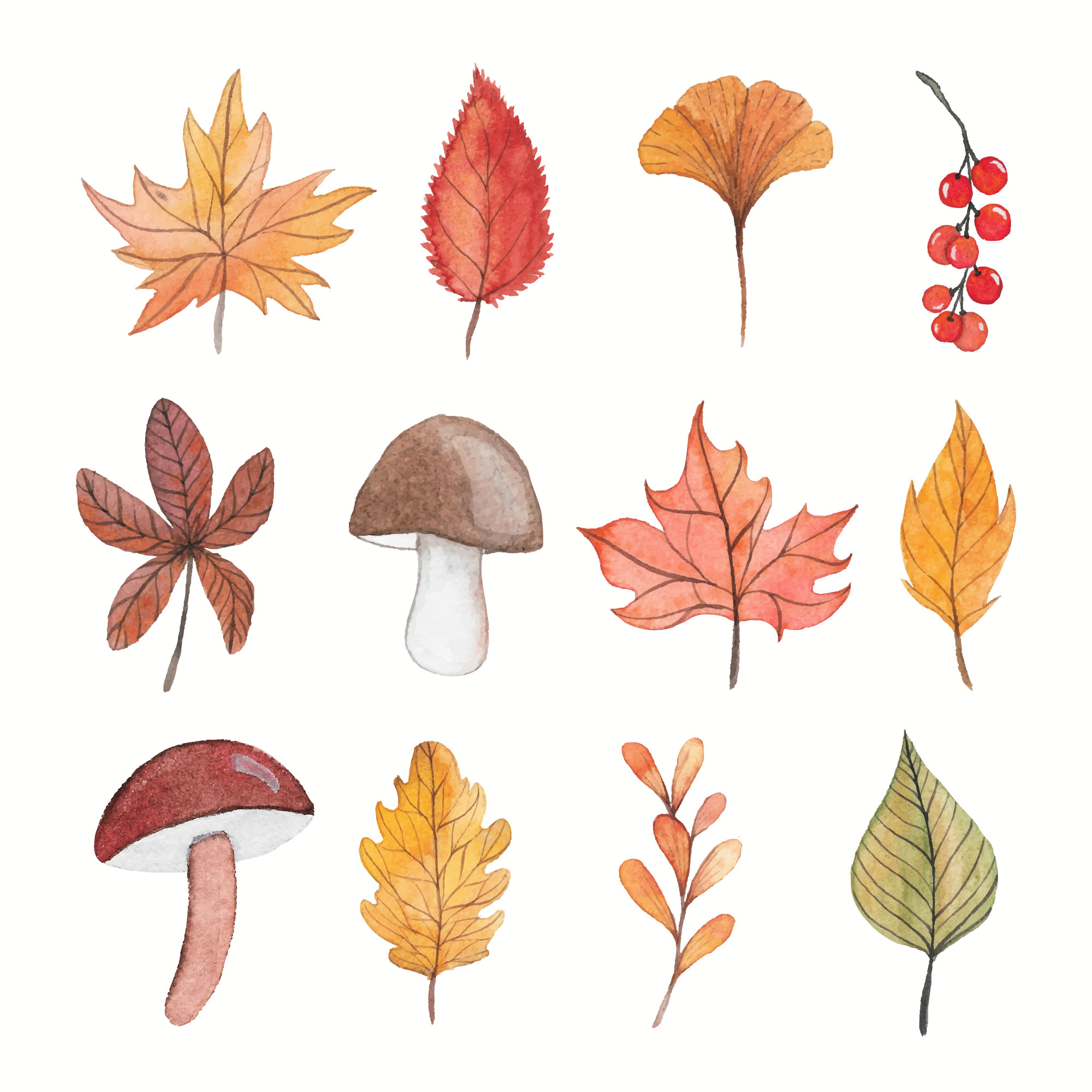 Autumn watercolor elements collection