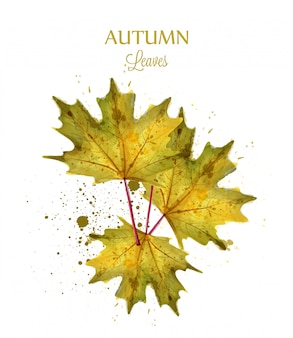 秋の水彩の葉