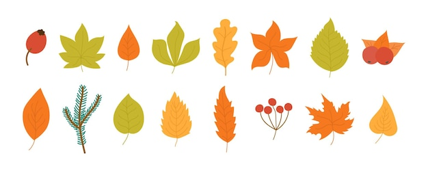 Autumnal garden dry leaves flat style illustration