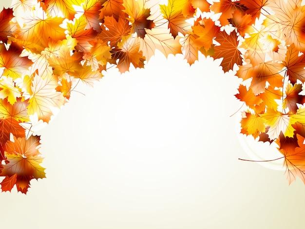 Осенний лист клена и солнечного света фона.