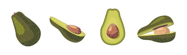 アボカドの新鮮な果物または野菜の全体と半分、白い背景で隔離のピット。ベジタリアンフードデザイン要素、ケトダイエット成分、ビーガン栄養、漫画ベクトルイラストクリップアートセット