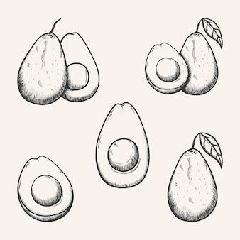 Авокадо фруктовый эскиз иллюстрации