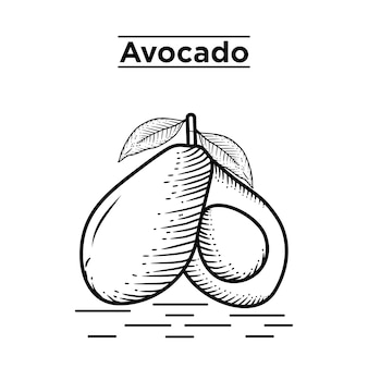 Avocado hand drawn