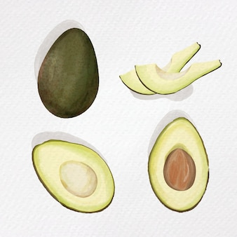 Avocado . watercolor paper texture illustration  on white background.