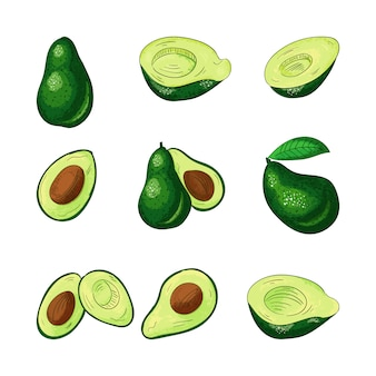 Avocado whole and cut color set.