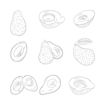 Avocado whole and cut outline illustrations set