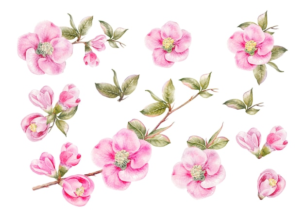 봄 꽃의 멋진 컬렉션.