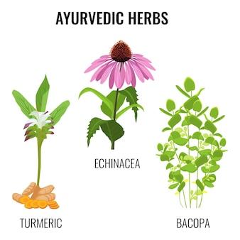 白で隔離されるアーユルヴェーダのハーブセット。根茎、バコパ水生植物、エキナセア草本花または紫色のコーンフラワーとウコン。リアルなイラストアーユルヴェーダハーブコレクション