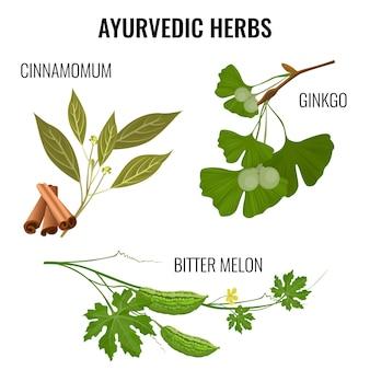 白で隔離される植物の枝のアーユルヴェーダハーブセット。シナモマムスティック、イチョウの鞘、ゴーヤの看板のフラットスタイルのポスター。料理の味付けのためのアジアの調味料材料。